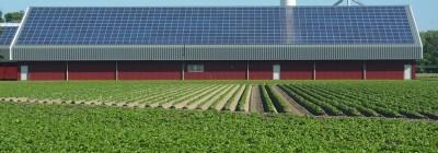 Zonnepanelen leveren boeren meer op dan aardappelen