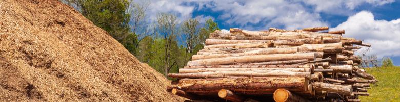 Biomassa geen hernieuwbare bron